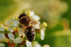 Der Bienentag